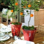home-plants-creative-ideas4-5.jpg