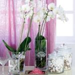 home-plants-creative-ideas4-9.jpg