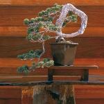 home-plants-creative-ideas5-14.jpg
