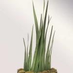 home-plants-creative-ideas5-2.jpg