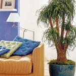 home-plants-creative-ideas5-4.jpg