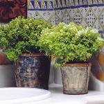 home-plants-creative-ideas5-9.jpg