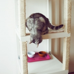 ikea-furniture-hacks-for-cats1-2