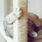 ikea-furniture-hacks-for-cats1-3