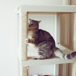 ikea-furniture-hacks-for-cats1-5
