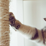 ikea-furniture-hacks-for-cats1-7