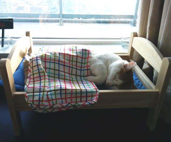 Как сделать коту постель своими руками