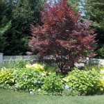 landscape-ideas-for-garden-and-yard-corners4-3