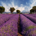 lavender-home-decorating-ideas6-2.jpg
