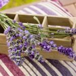lavender-home-decorating-ideas2-1.jpg