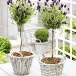 lavender-home-decorating-ideas2-6.jpg