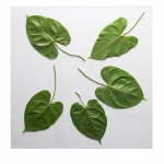 leaf-embossed-tabletop1.jpg