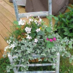 planting-flowers-in-chairs2-14.jpg