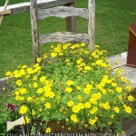 planting-flowers-in-chairs2-8.jpg