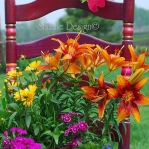 planting-flowers-in-chairs-colorful13.jpg