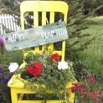 planting-flowers-in-chairs-colorful14.jpg