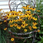 planting-flowers-in-chairs3-2.jpg