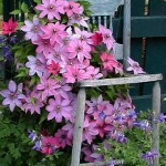 planting-flowers-in-chairs3-3.jpg