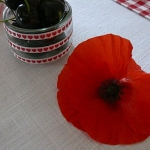 poppy-decorated-table-setting3-6.jpg