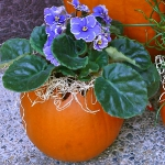 pumpkins-vase-new-floral-ideas6-3-2.jpg