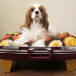 recycled-suitcase-ideas-pets-bed6.jpg