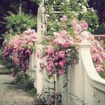 roses-in-garden-fence1.jpg