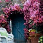 roses-in-garden-fence6.jpg