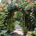 roses-in-garden-archway2.jpg