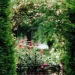 roses-in-garden-archway3.jpg
