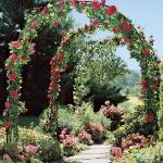 roses-in-garden-archway4.jpg