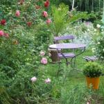 roses-in-garden-relax-nooks3.jpg