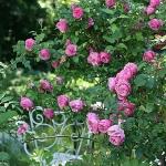 roses-in-garden-inspiration2-4.jpg