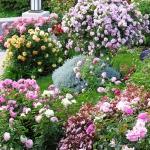roses-in-garden-inspiration2-5.jpg