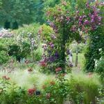 roses-in-garden-inspiration2-7.jpg