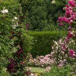 roses-in-garden-inspiration2-8.jpg