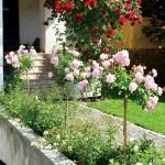 roses-in-garden-inspiration3-5.jpg
