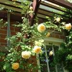 roses-in-garden-inspiration5-1.jpg