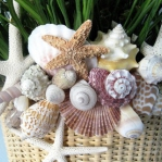 seashells-decor-ideas-nature11-2.jpg