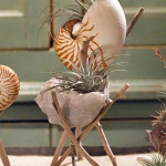 seashells-decor-ideas-nature7.jpg
