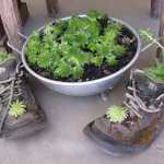 shoes-container-garden4-4.jpg