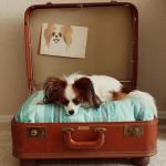 simple-diy-ideas-small-doggie-beds-in-suitcase3