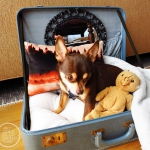 simple-diy-ideas-small-doggie-beds-in-suitcase5