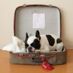 simple-diy-ideas-small-doggie-beds-in-suitcase6
