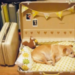 simple-diy-ideas-small-doggie-beds-in-suitcase7
