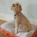 simple-diy-ideas-small-doggie-beds-in-suitcase9