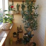 smart-russian-balcony-contest-by-ikea-plants1.jpg