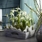 snowdrops-spring-decor-ideas4-1