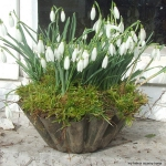 snowdrops-spring-decor-ideas7-2