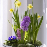 spring-flowers-new-ideas-hyacinths2.jpg