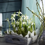 spring-flowers-new-ideas-snowdrops-and-crocus5.jpg
